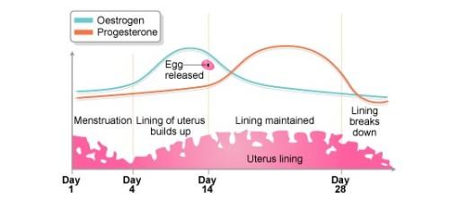 grafik estrogen-progesteron